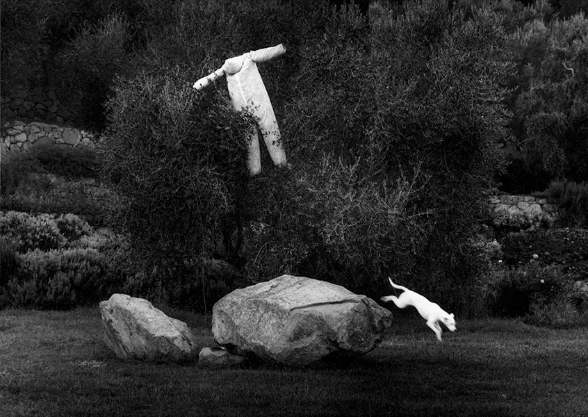 White Dog, 2000
