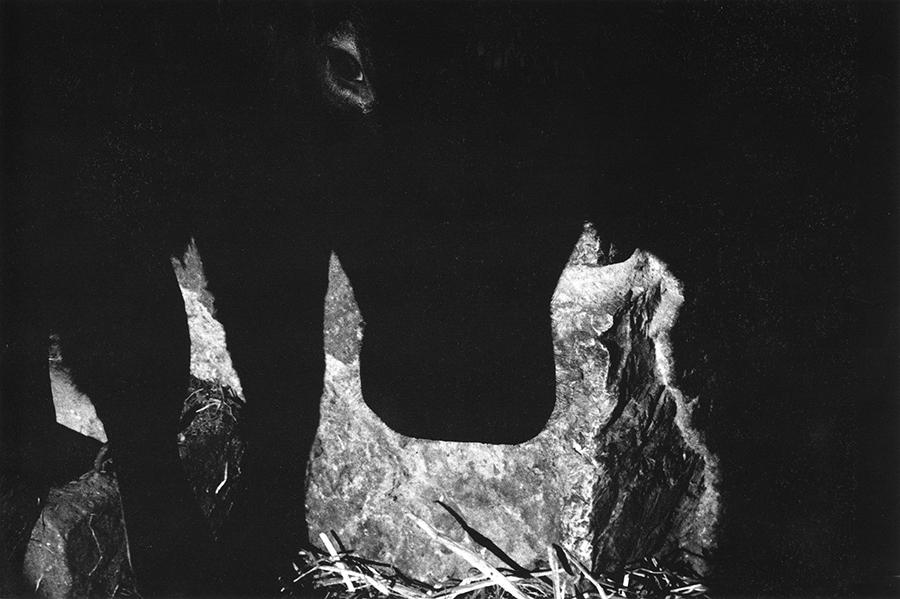 Antonio Biasiucci, Cow, 1990